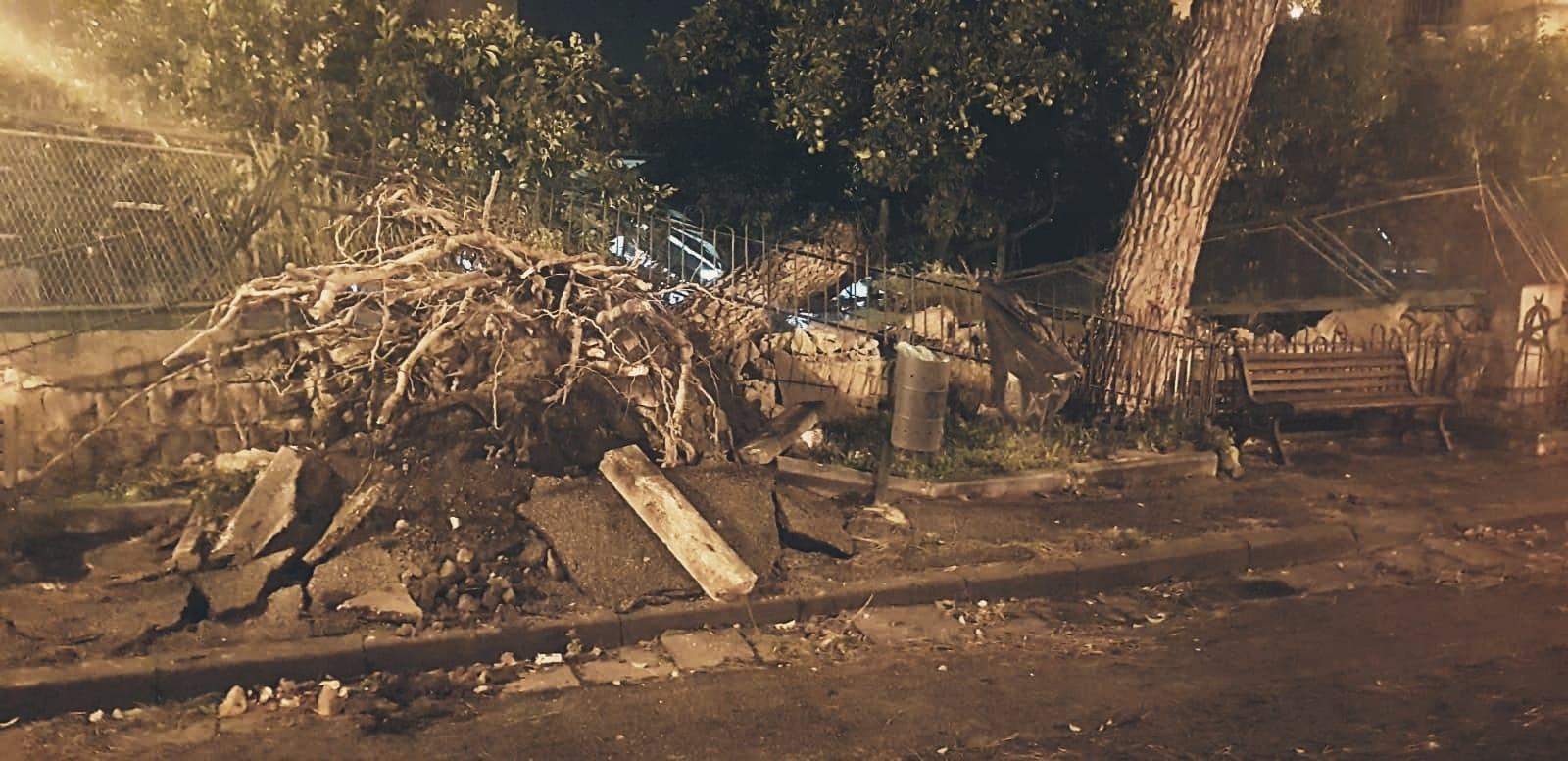 albero abbattuto dal vento sulla villa