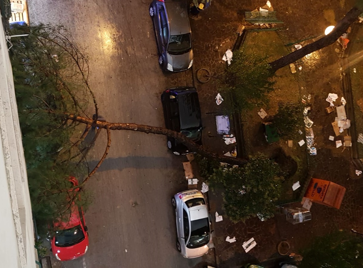 foto albero casoria