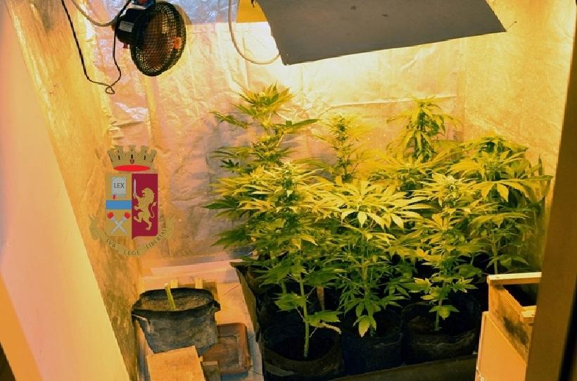 marijuana torre del greco