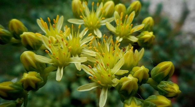 orto botanico brividi d'estate